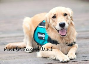The Top  5 Ways to Show Your Dog Love + A Comfort Food Recipe