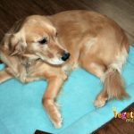 West Paw Designs – Gia loves her new Eco Nap!
