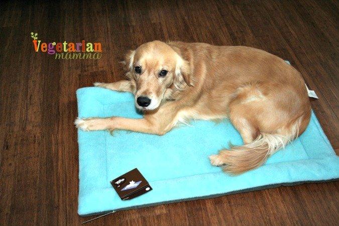 West Paw Designs #Review @vegetarianmamma.com #dog #servicedog