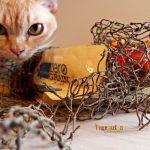 Rachael Ray Nutrish – Zero Grain Cat Food