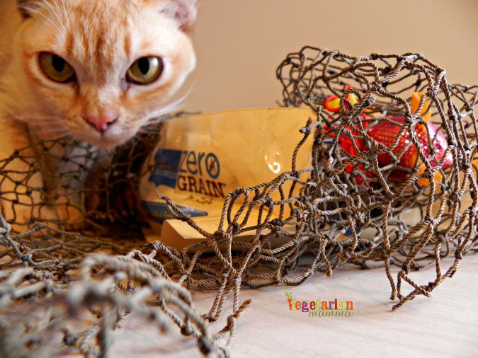 Healthy By Design Cat Food Review