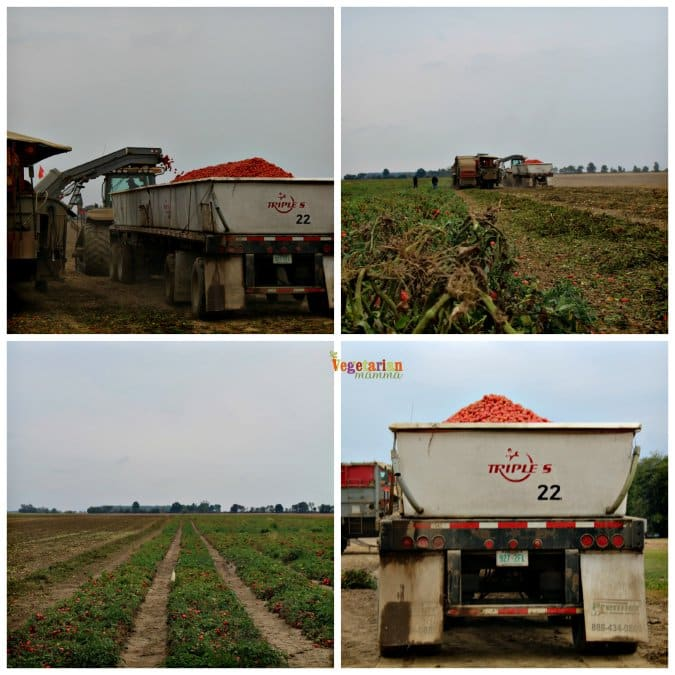 photos from red gold farm tour