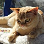 Meet Chianti The Cat – the official cat of VegetarianMamma