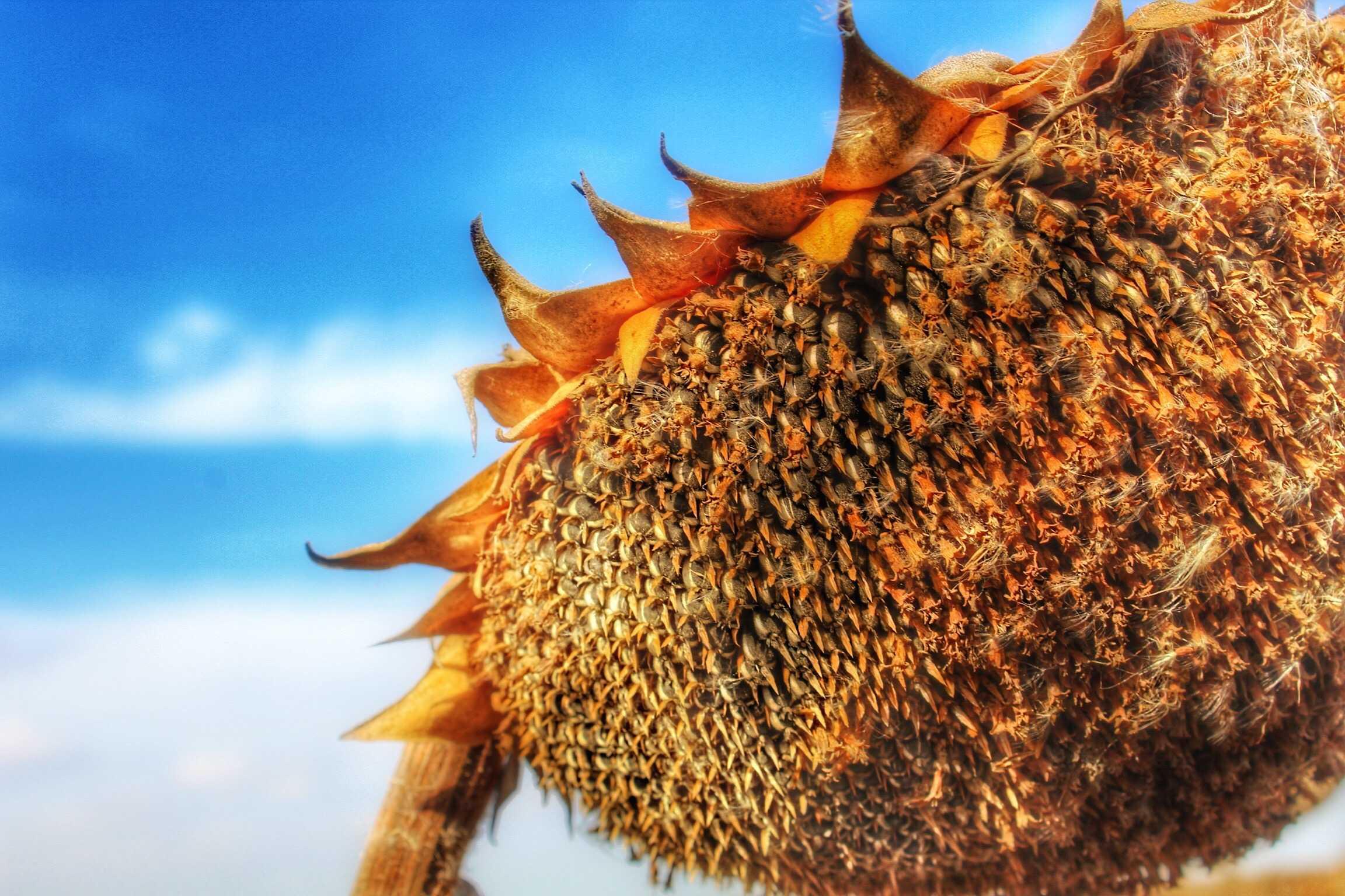 Seed to SunButter @Vegetarianmamma.com