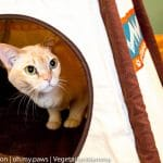Animal Coworker Cats share about P.L.A.Y. + A Cat TeePee