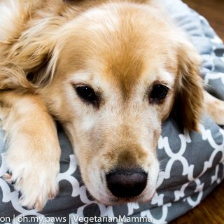 Designing your home with your pet in mind – Original Digs