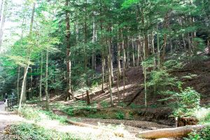10 Places to Visit in Hocking Hills! Discover Ohio!