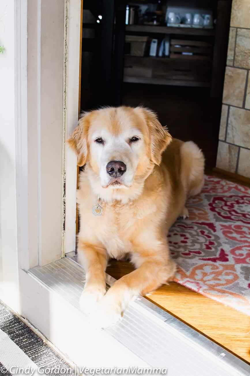 Gia The dog