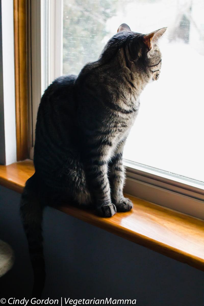 cat sitting on a windowsill